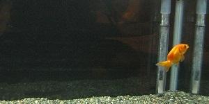 水槽-1.jpg